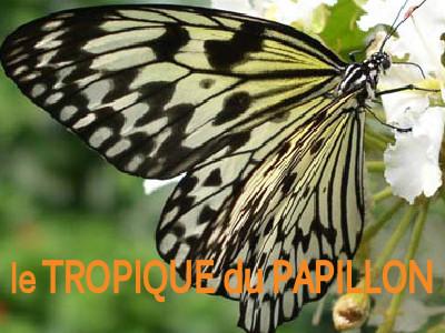 tropique-pap